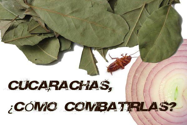 Entre servicios de desatascos este verano en Castellón, ya están aquí, las cucarachas. ¿Qué hacemos para evitarlas?