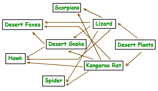 Desert Hawk Diagram 1991 Gmc Sierra Tail Light Wiring Food Web Pinterest Trophic Level And Ecology