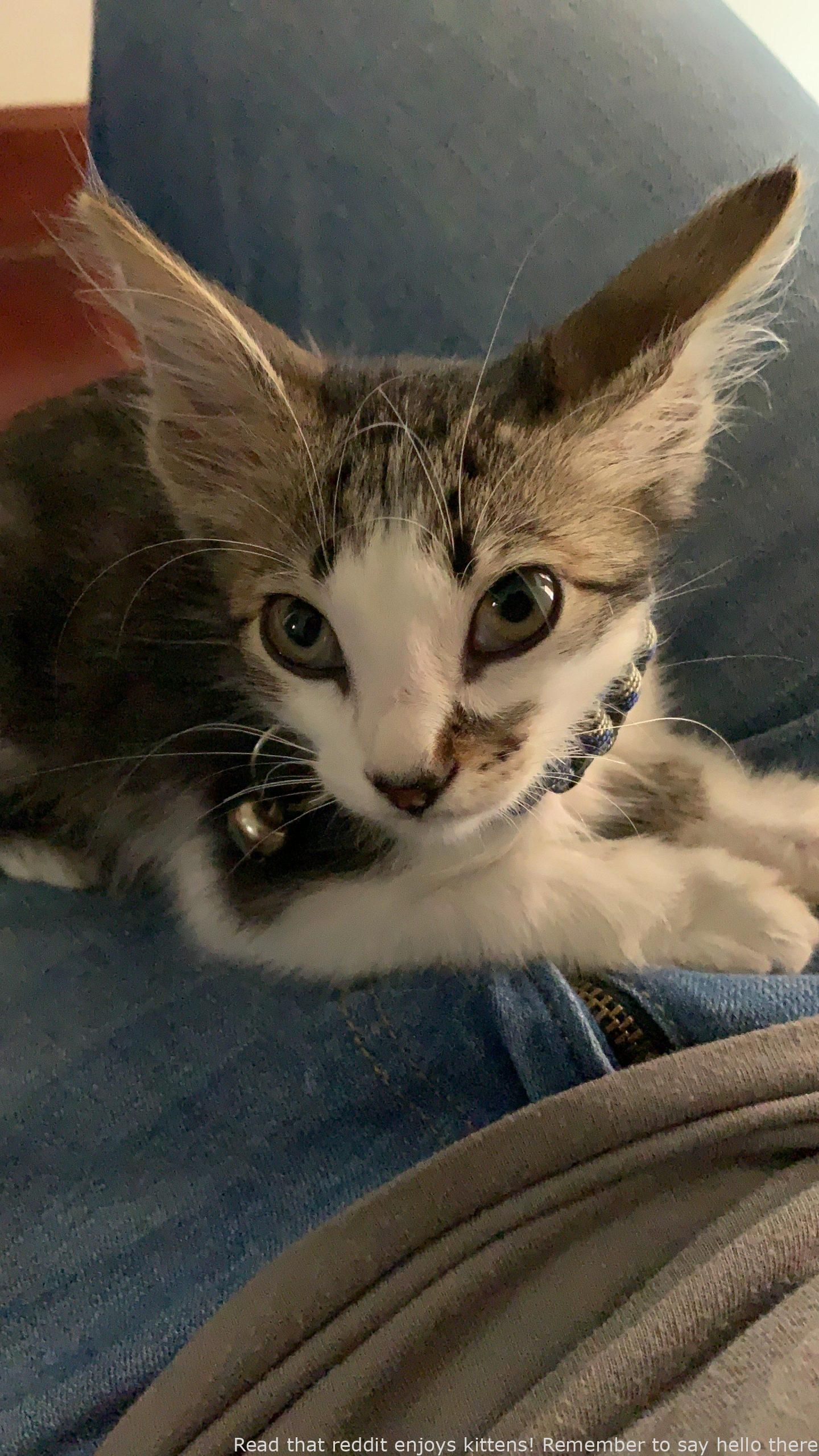 Read That Reddit Enjoys Kittens Remember To Say Hello There To Bandit Formidable Cats Kittens Cat Qoutes Kittens Cutest