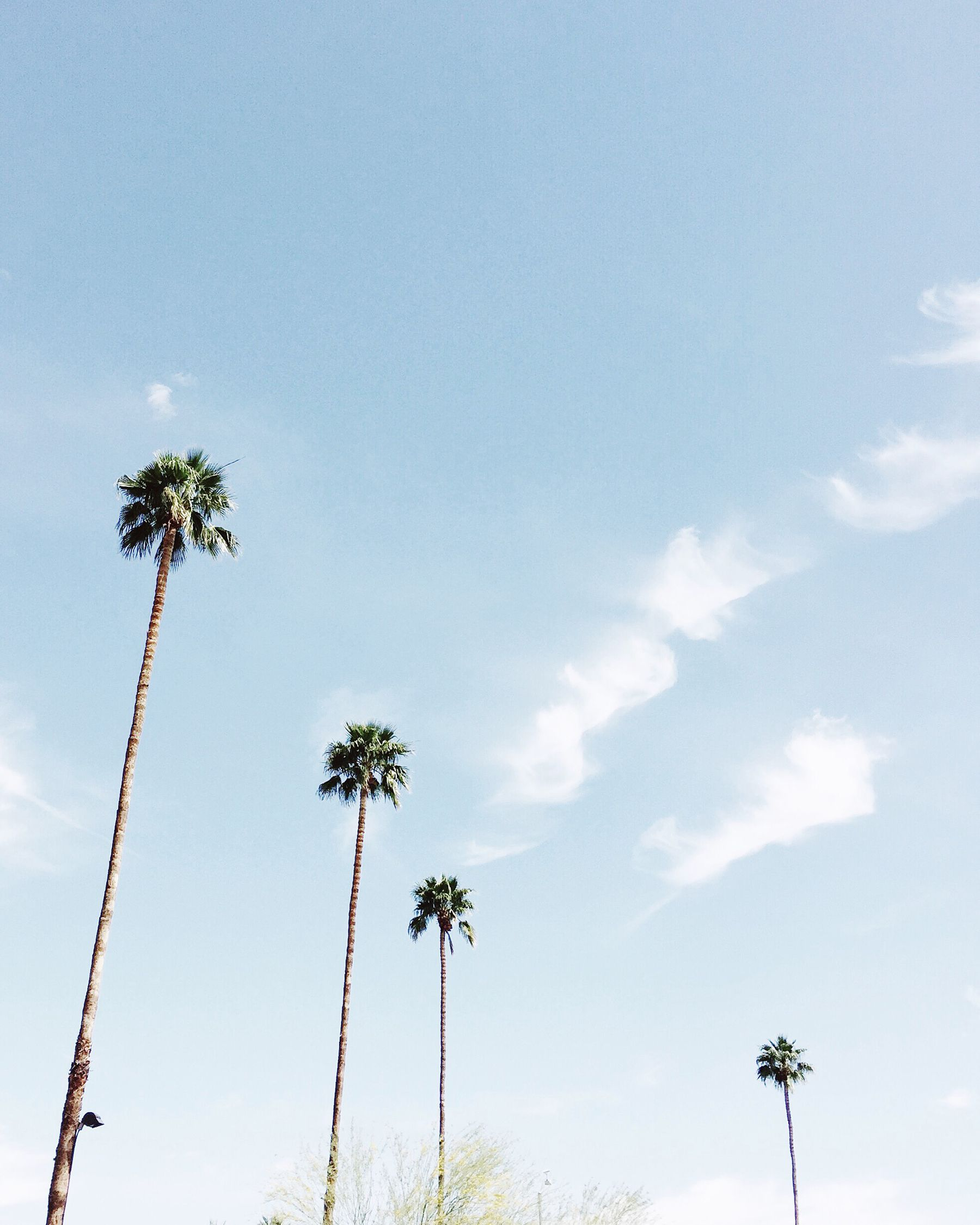 Palm Tree Iphone Wallpaper: Palm Springs Palm Trees. Via Mija