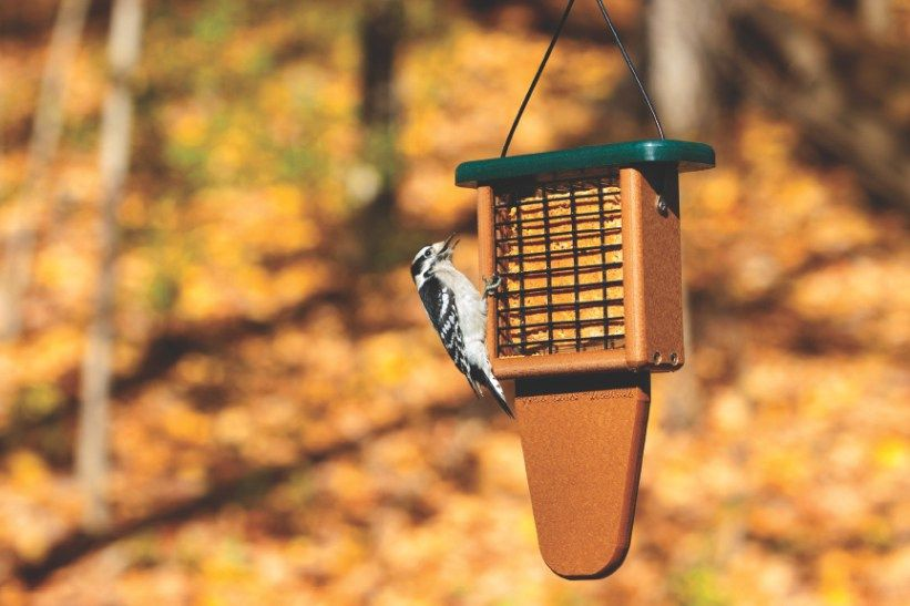 Does Hot Pepper Keep Away Squirrels? Best bird feeders