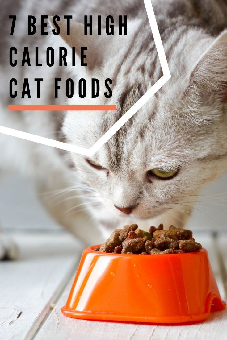 7 Best High Calorie Cat Foods Our Guide to Help Cats Gain