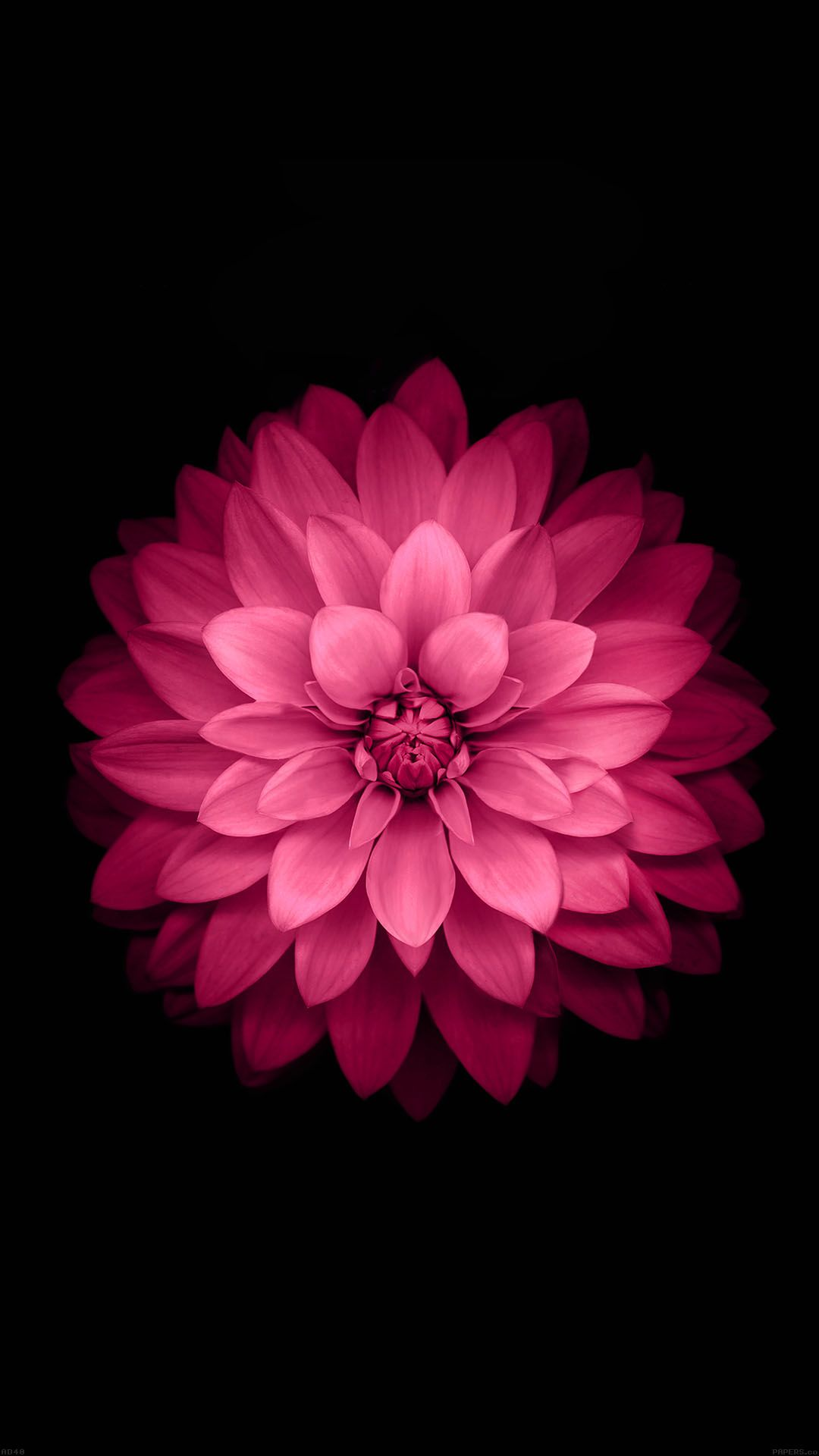 Tap And Get The Free App Nature Pink Flower Black Stylish