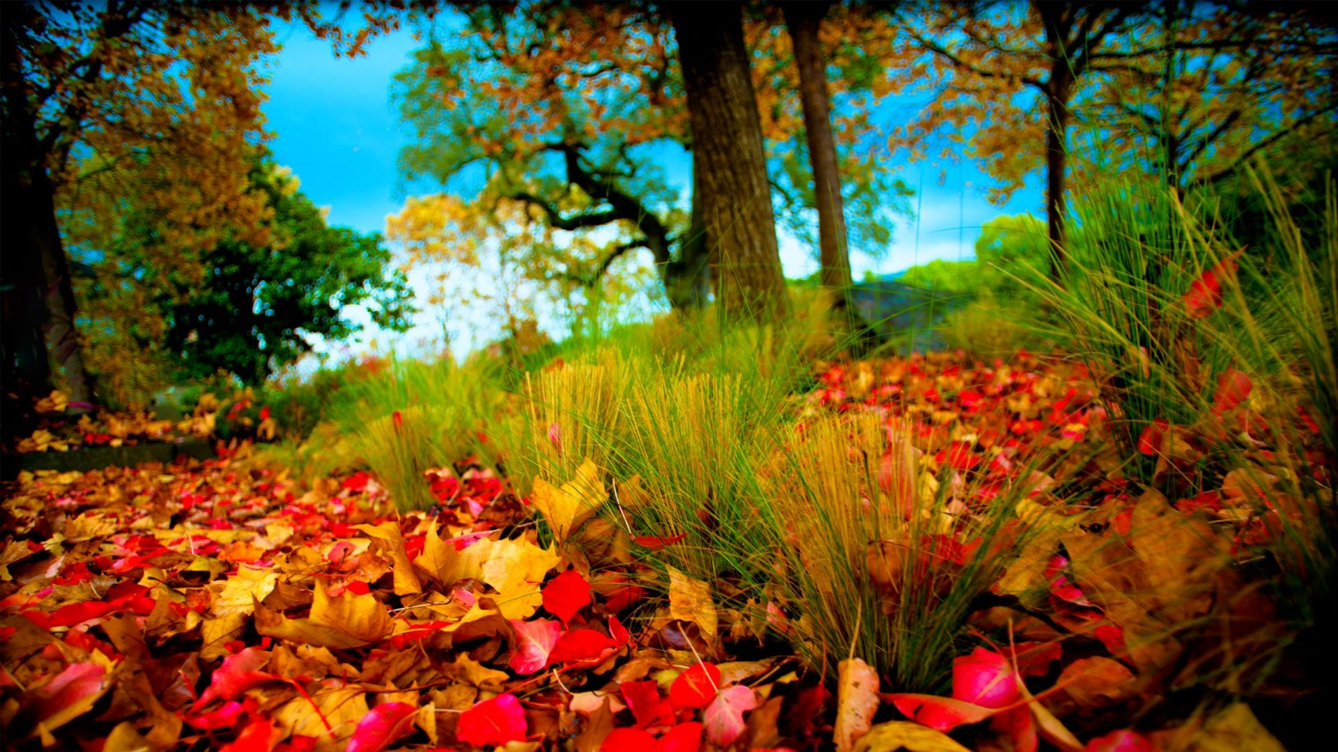 Wallpaper Hd Phd Wallpaper Autumn Leaves And Fall Colors For X Hdtv ...