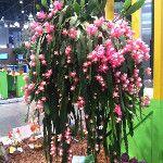 This one Ida show stopper #FlowerShow  : http://twitpic.com/8skdjf