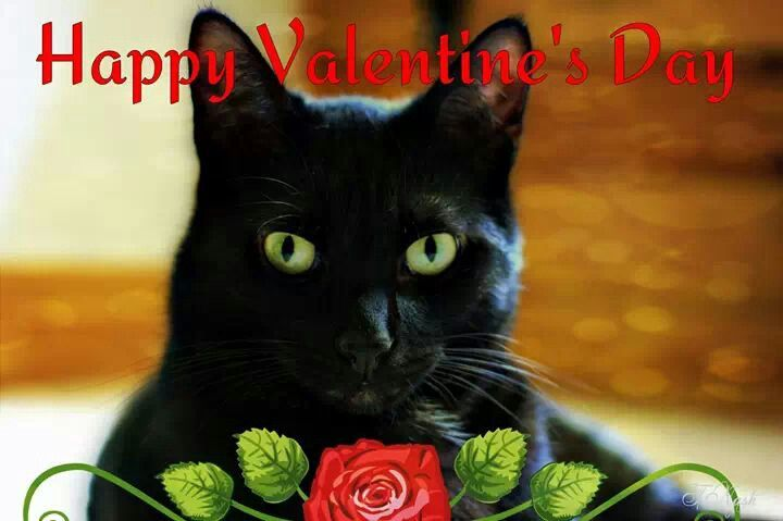 Image result for happy valentines day with cats pinterest