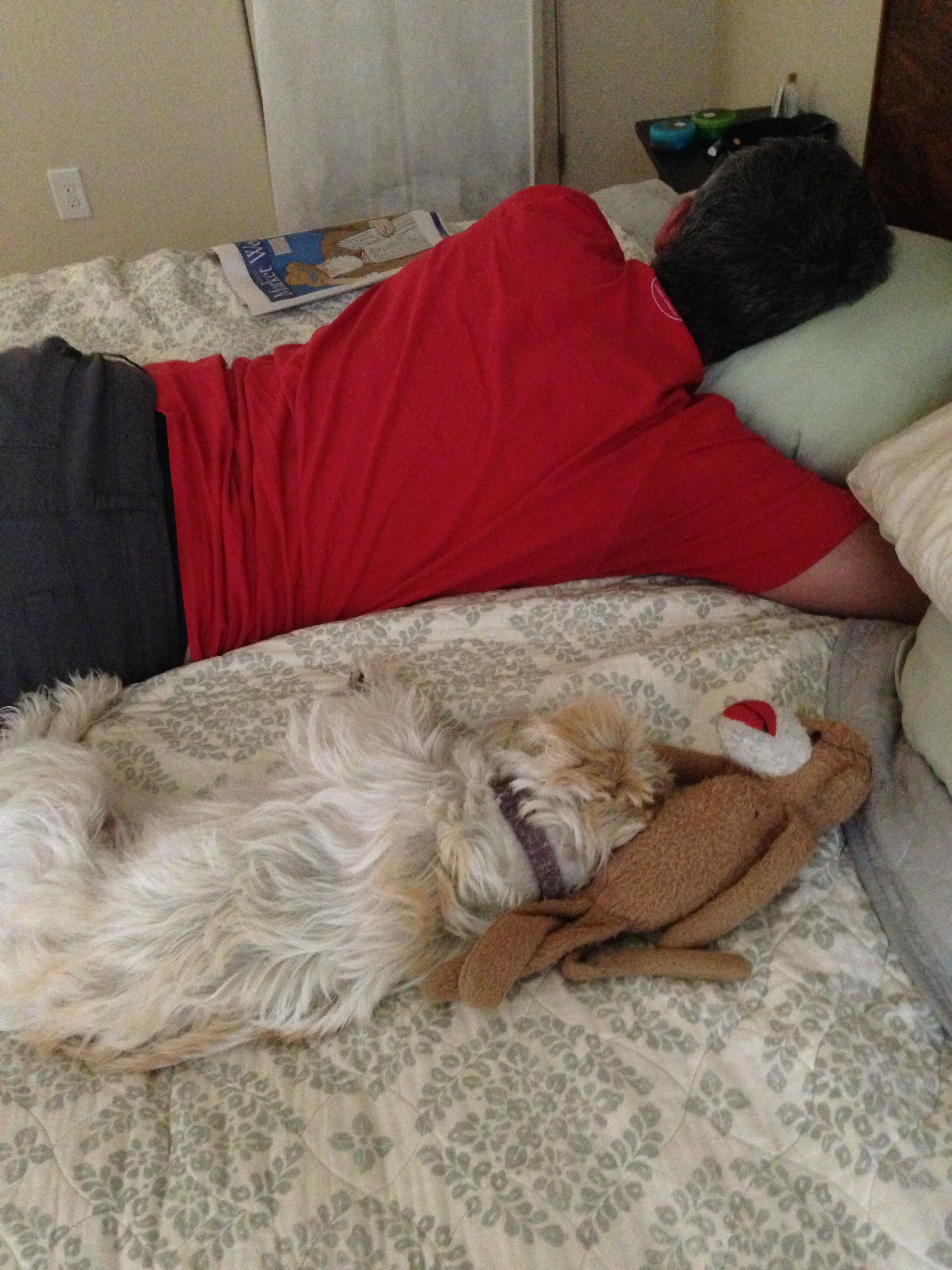 Soba Schnoodle And Dad Nappin Schnoodle Dogs And Puppies Pet Dogs