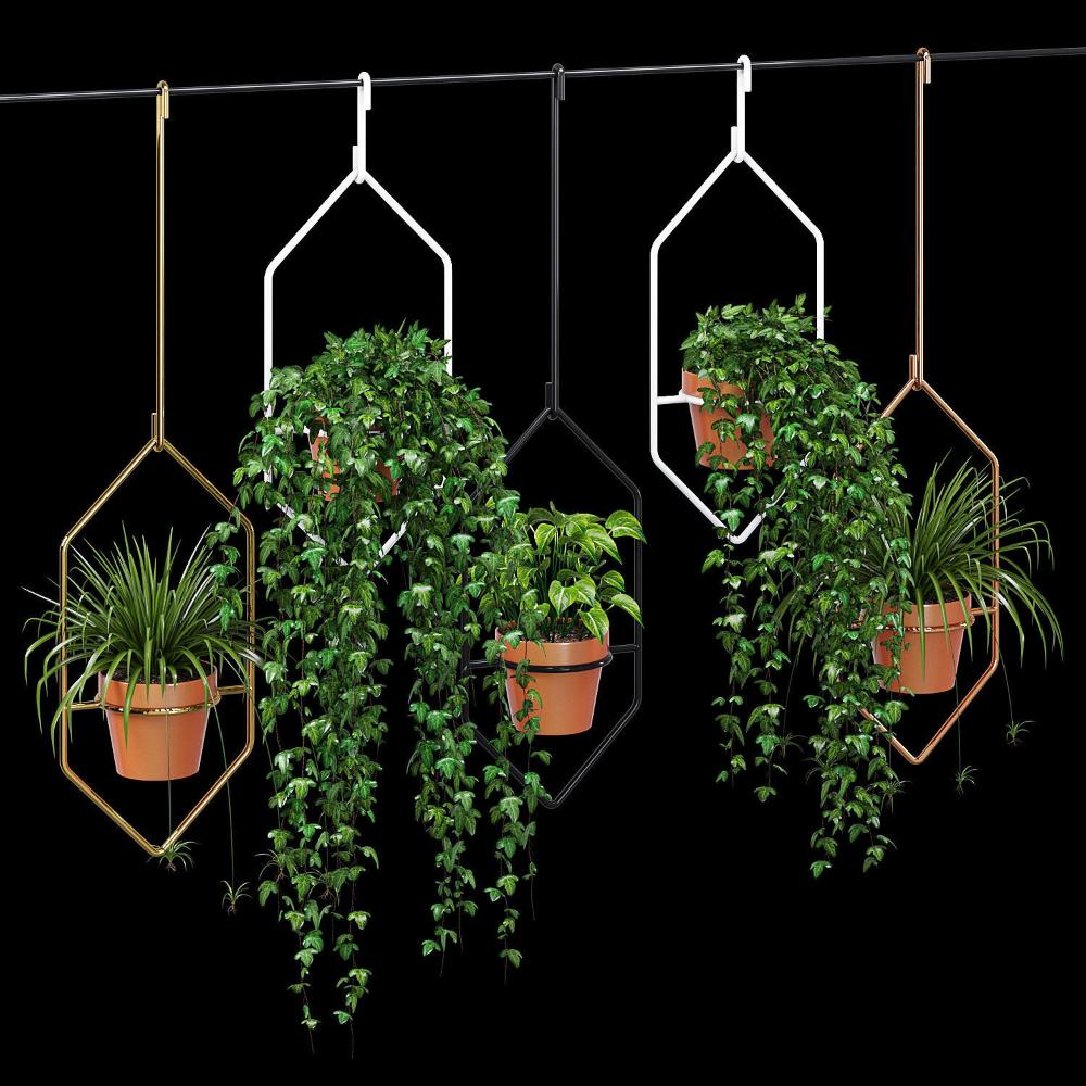 Ampelous Plant 3d Model Plants Hanging Flower Pots Hexagon