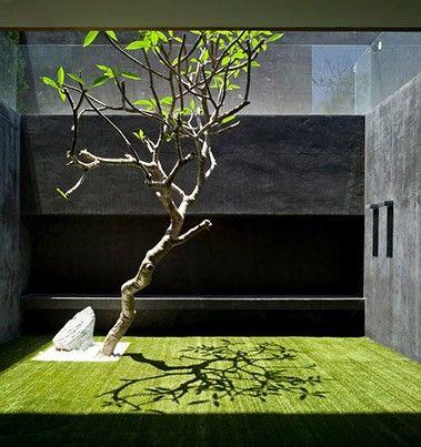 pitsou kedem architects✨✨ idea Pinterest Terrasses, Vegetal - petit jardin japonais interieur