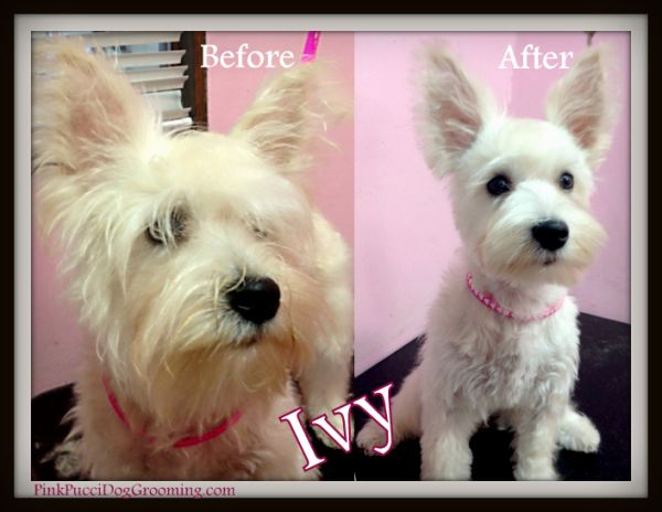 Adorbs Ivy Before After Dog Grooming Styles Dog Grooming Dogs