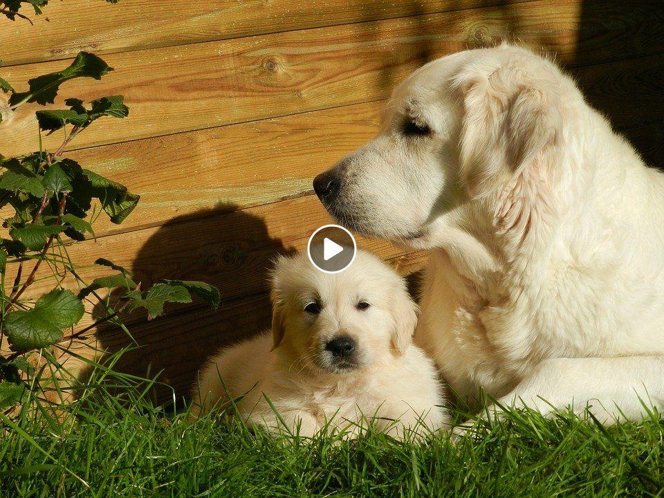Do You Love Golden Retriever Dog Check This Wallet Case