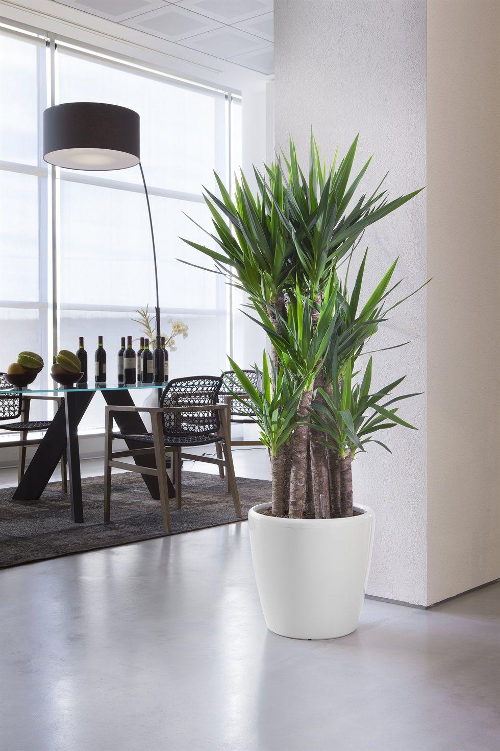 Arredare con le piante cerca con google piante per for Arredare ufficio idee