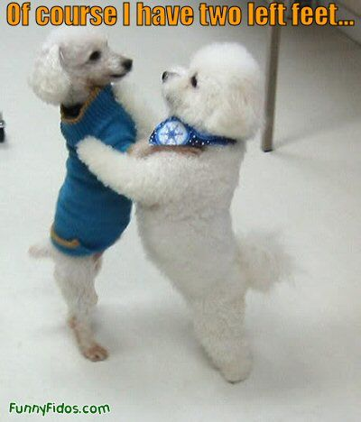 Two Dogs Dancing Dancing Animals Cute Animals Funny Dog Pictures