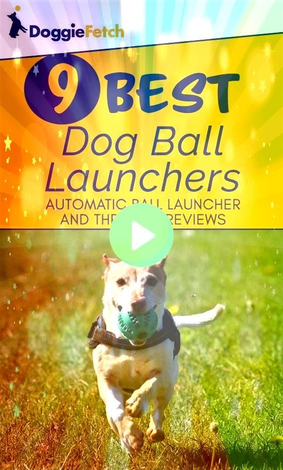 play with your Let one of these do it for you Click here to learn moreCant play with your Let one of these do it for you Click here to learn more Keep your pets paws clea...