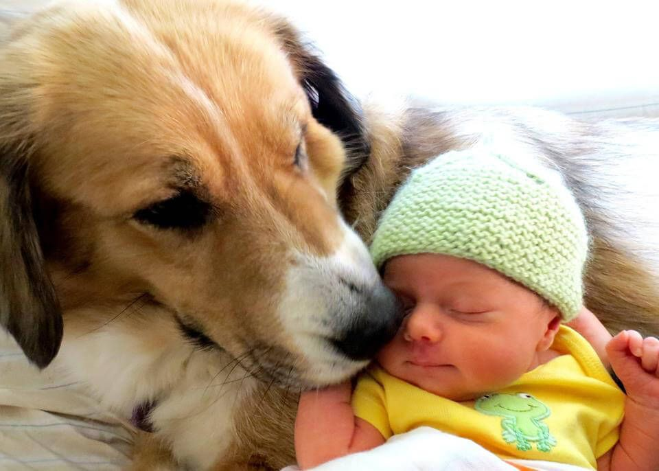 Introducing a New Baby to Your Dog or Cat New baby