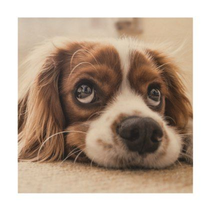 Cavalier king charles spaniel wood wall decor - dog puppy dogs doggy pup hound love pet best friend