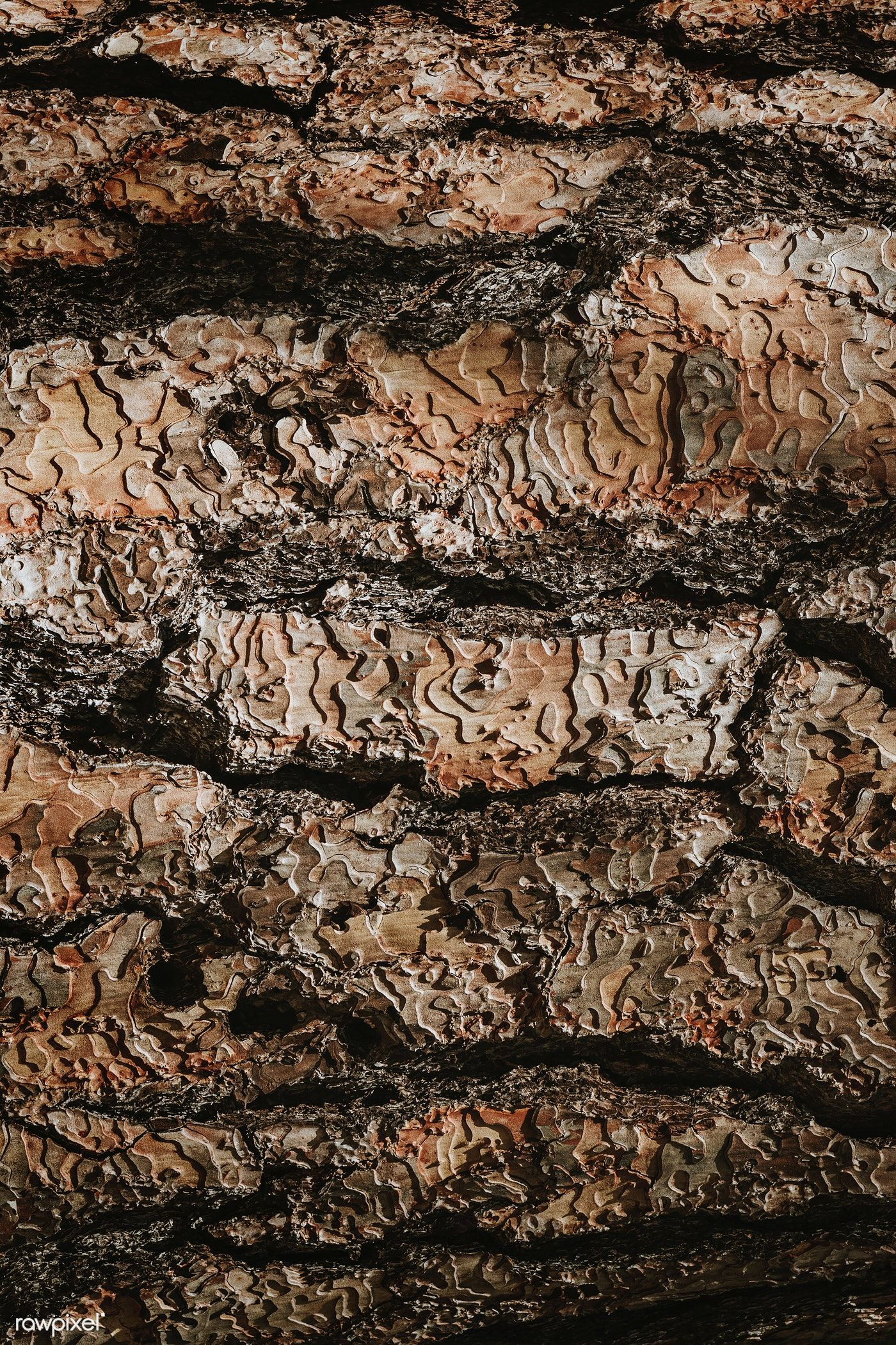 Brown detailed wooden textured background free image by