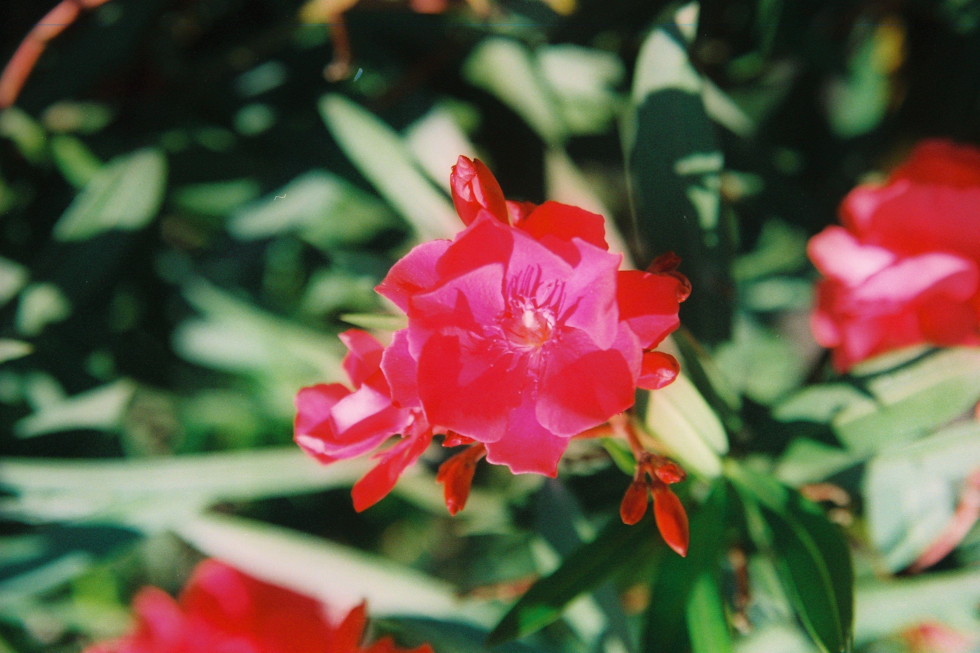 Fleur de Bougainvilléa Projekte