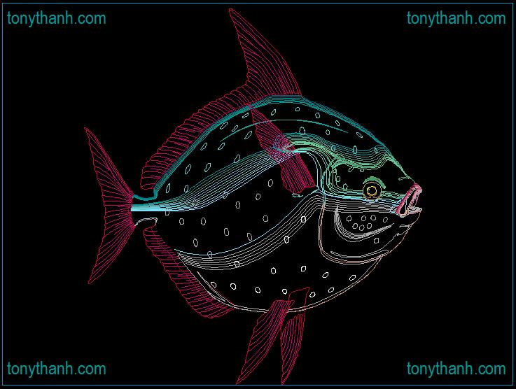 Blue Tang Cad Block Of Sea Fish Round And Thin Fish
