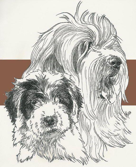 Old English Sheepdog, father and son, Barbara Keith