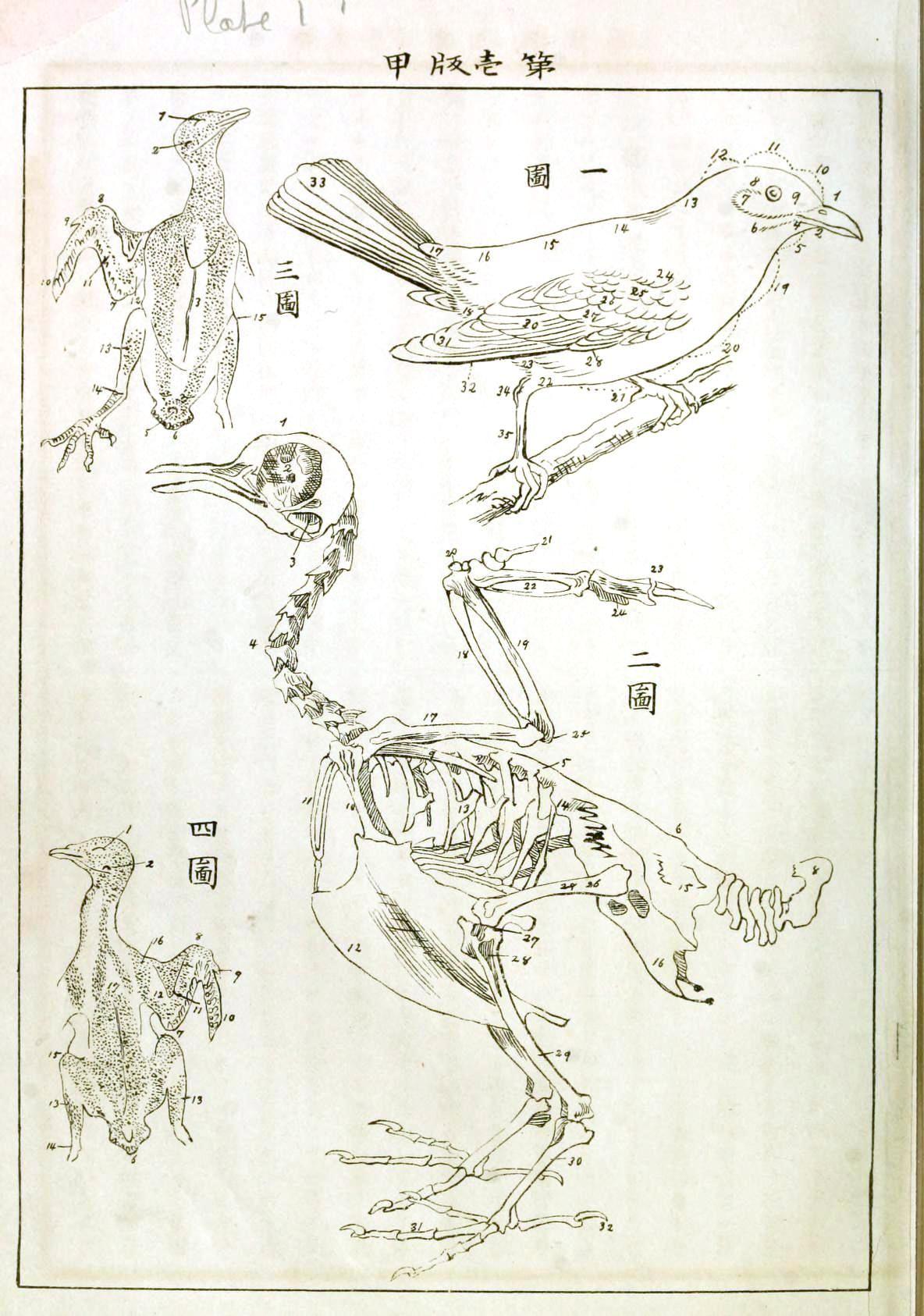Animimal Bird Anatomy