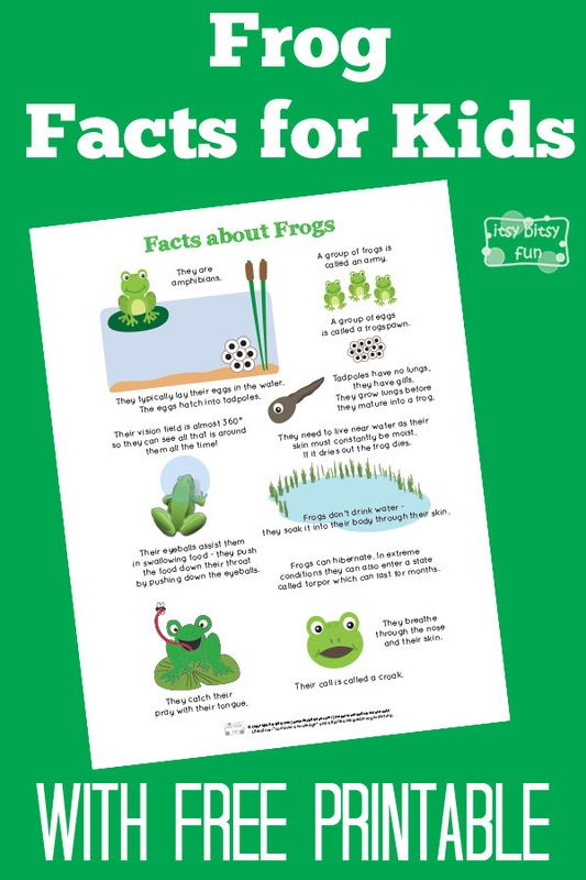 Lily Pad Facts For Kids