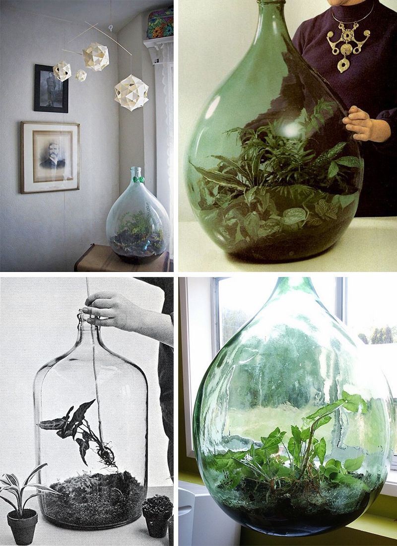 dame jeanne terrarium elephantintheroom we have a huge bottle now pinterest plantes idee. Black Bedroom Furniture Sets. Home Design Ideas
