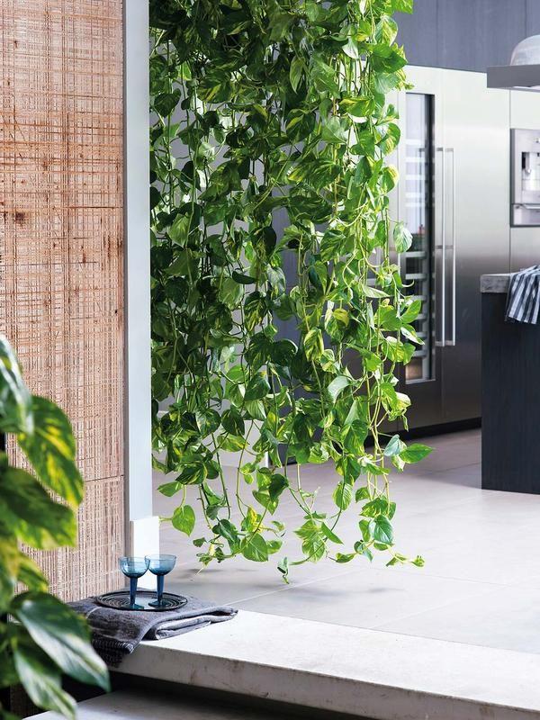 Decorar con flores y plantas de interior plantes d for Jardineria exterior con guijarros