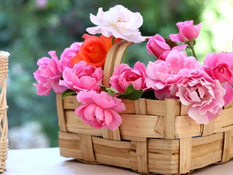 خلفيات واتس اب ورد واااو اروع الخلفيات والصور الجميلة احلى رمزيات واتس اب ورد مجلة رجيم Hd Flowers Home Flowers Wallpaper