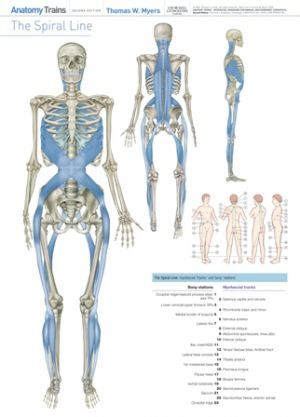 Posters Art Science Of The Human Body Pinterest Anatomy