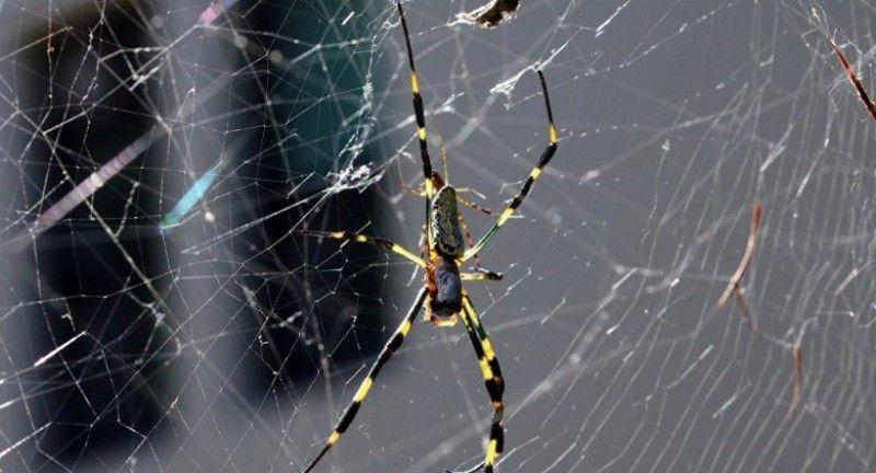 لهذه الأسباب لا تقتل العناكب في المنزل ما معنى وجود العنكبوت في البيت Animals Spider Insects