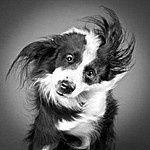 Pictures of dogs and cats shaking off water. Soooo funny, and cute!