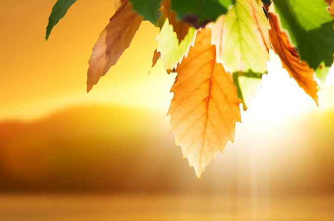Mabon Meaning Autumn Equinox Meaning and Insights | Symbolic Meanings Blog by Avia Venefica #autumnalequinox