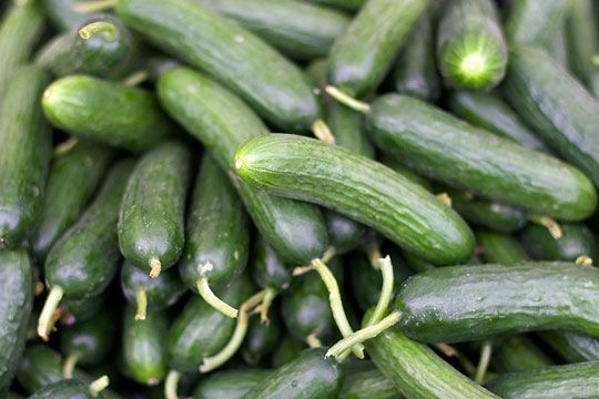 Store cucumbers a room temp. Temperatures below 50 degrees can cause injuries to cukes.