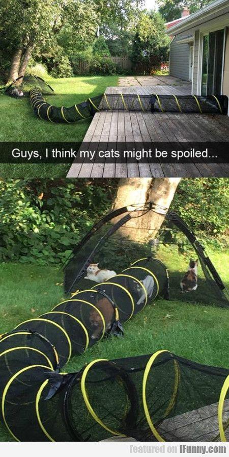 cathouseshirt Сумасшедшие кошки, Домашние животные