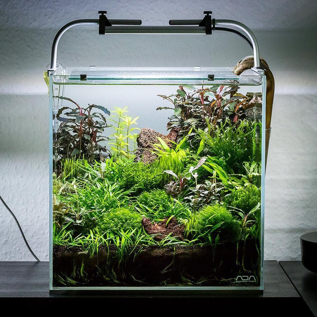Mein 30c Ok Es Braucht Wieder Etwas Form Und Struktur Und Ich Muss Die Glasware Putzen Aber Ich Hatte Noch Ni Nano Aquarium Aquarien Aquarium