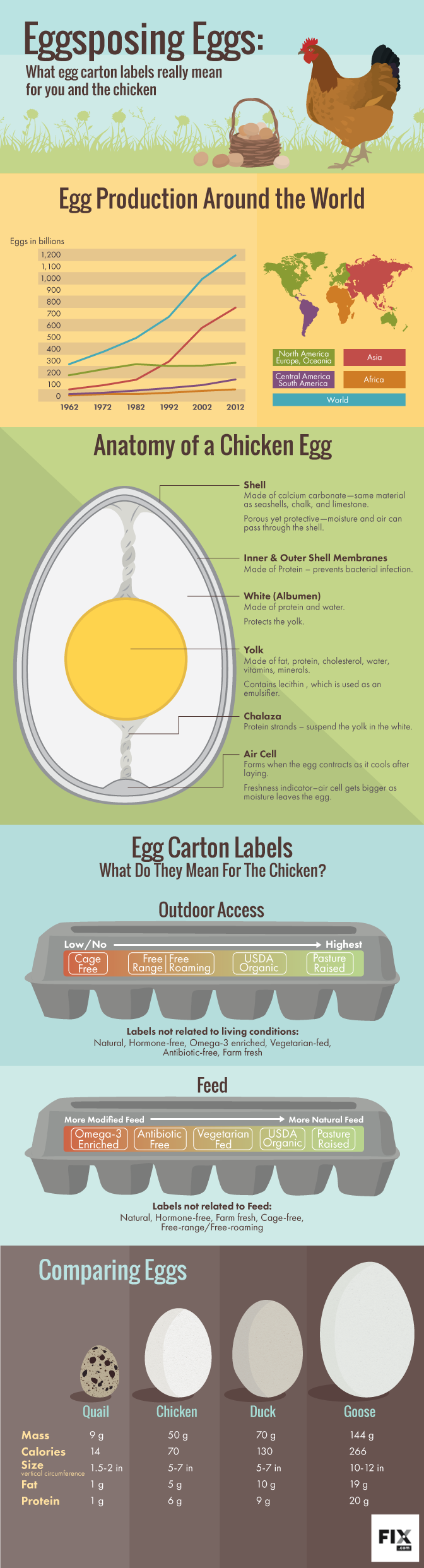 Eggsposing Eggs What Egg Carton Labels Really Mean for You and the Chicken #infographic