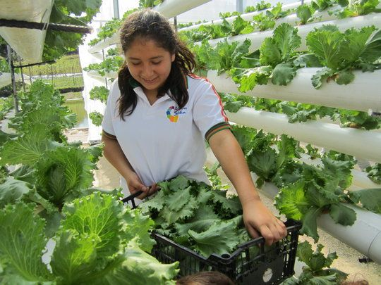 A project report from Aquaponics Solution to Climate Change on - project report