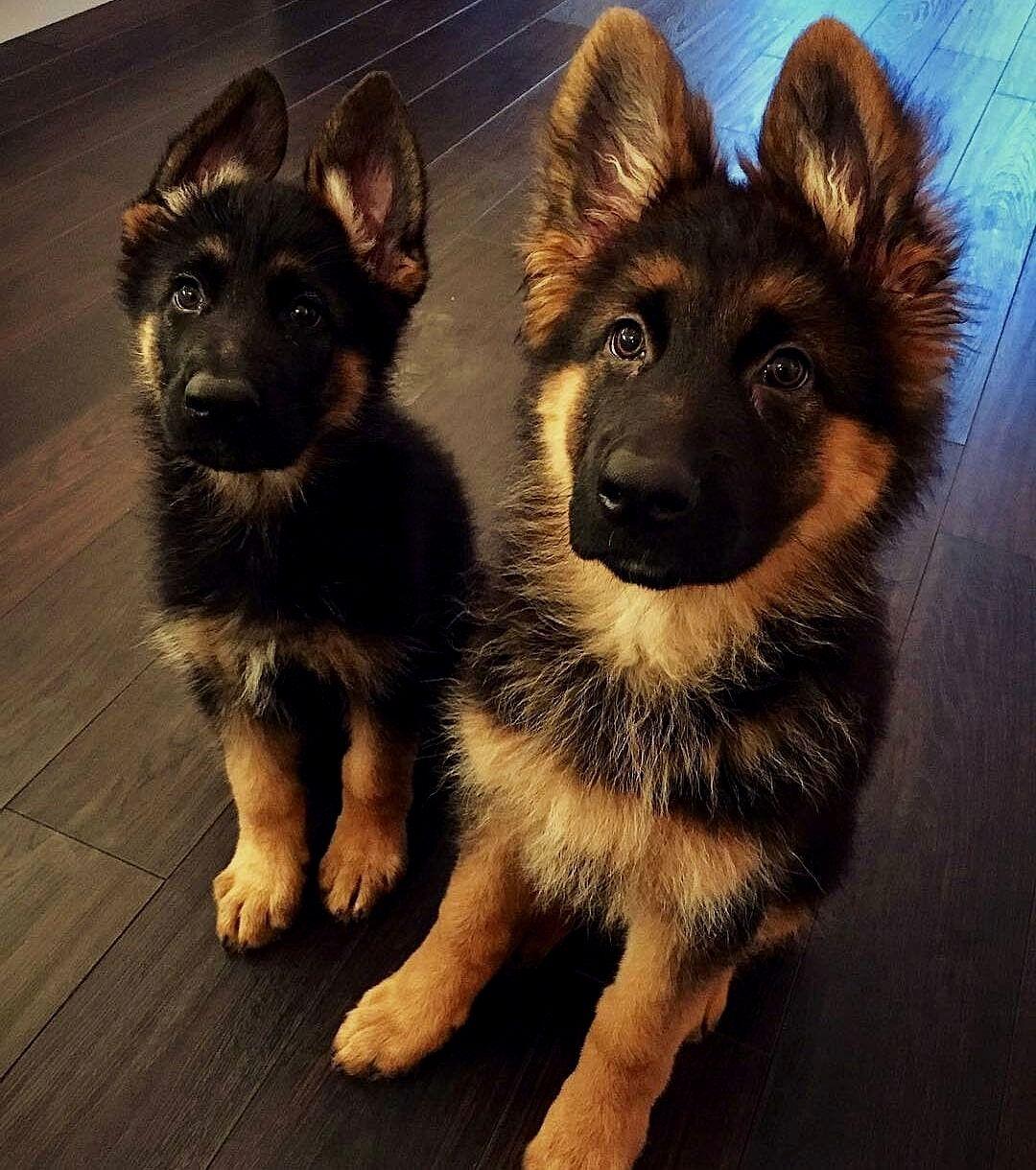 2 Freunde fürs Leben Uns folgen hunde.leine hundeblog