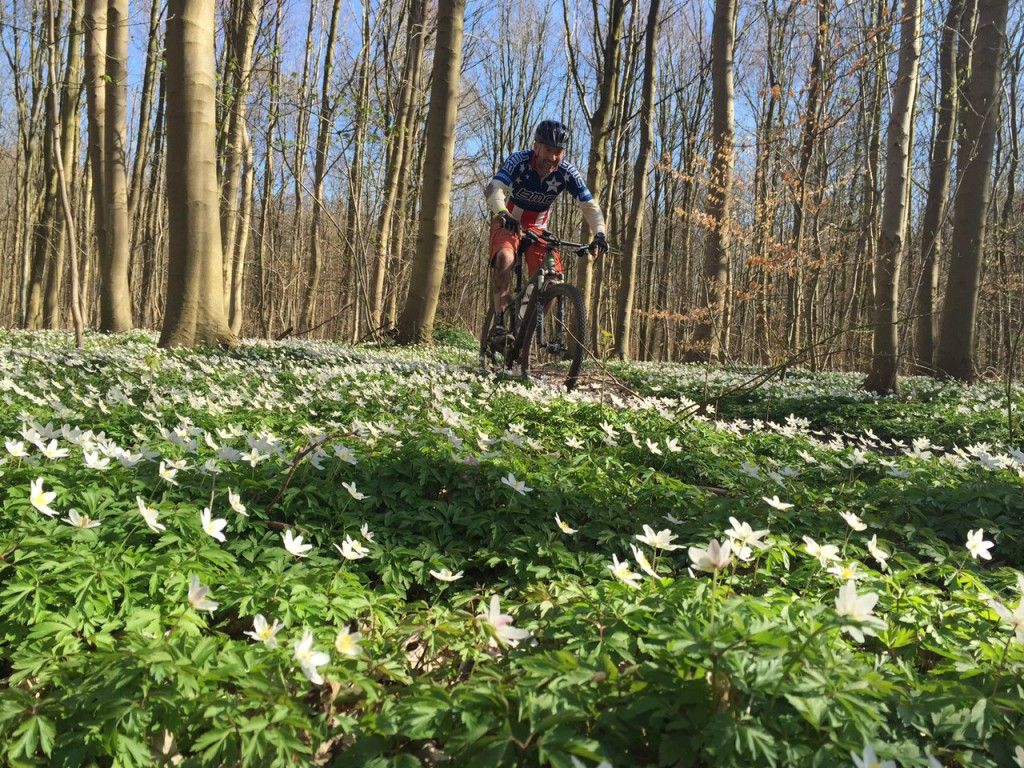 Riding in a sea of flowers on spring trail Hareskoven, Denmark
