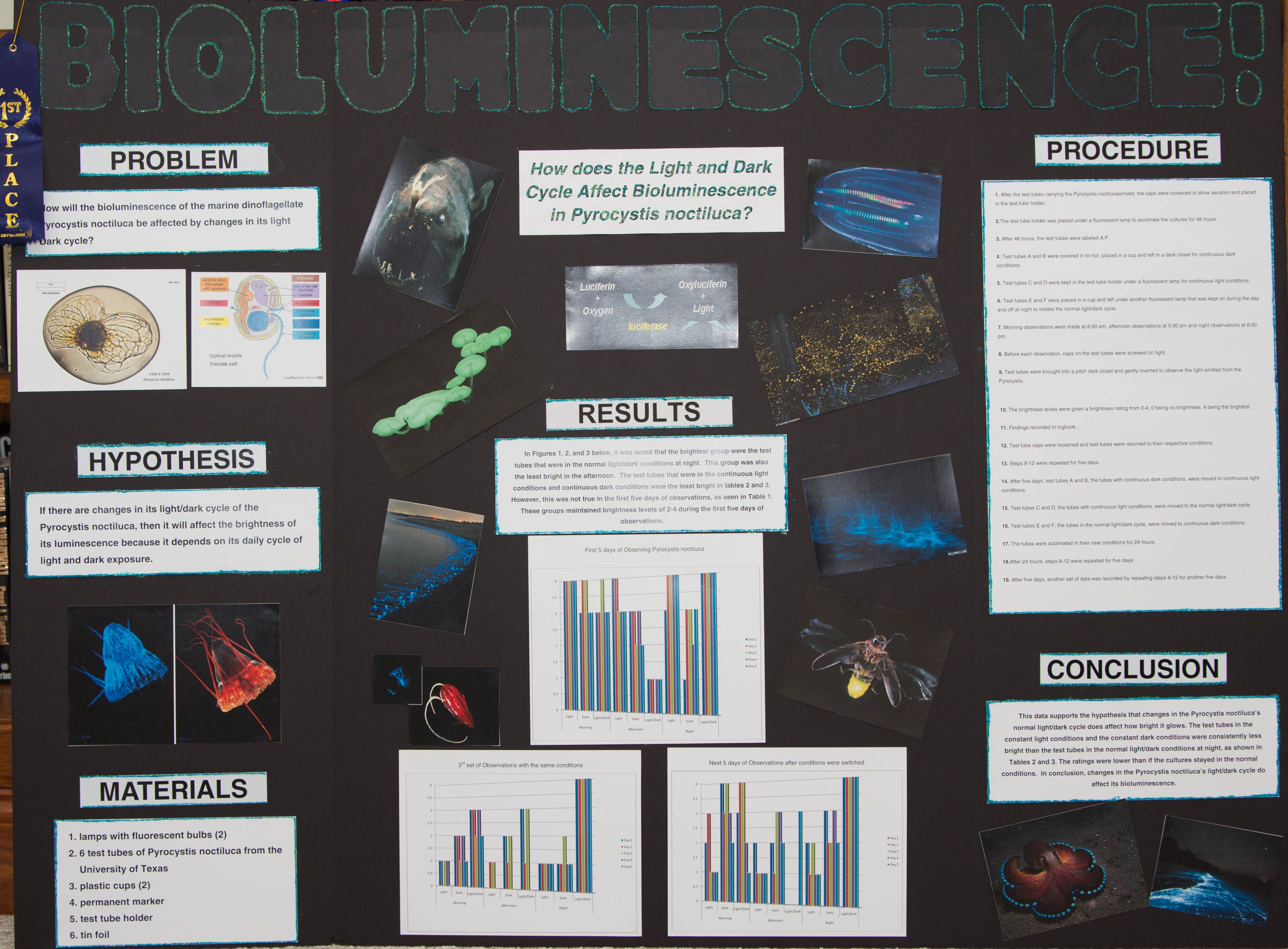 Bioluminescence Investigating Glow In The Dark