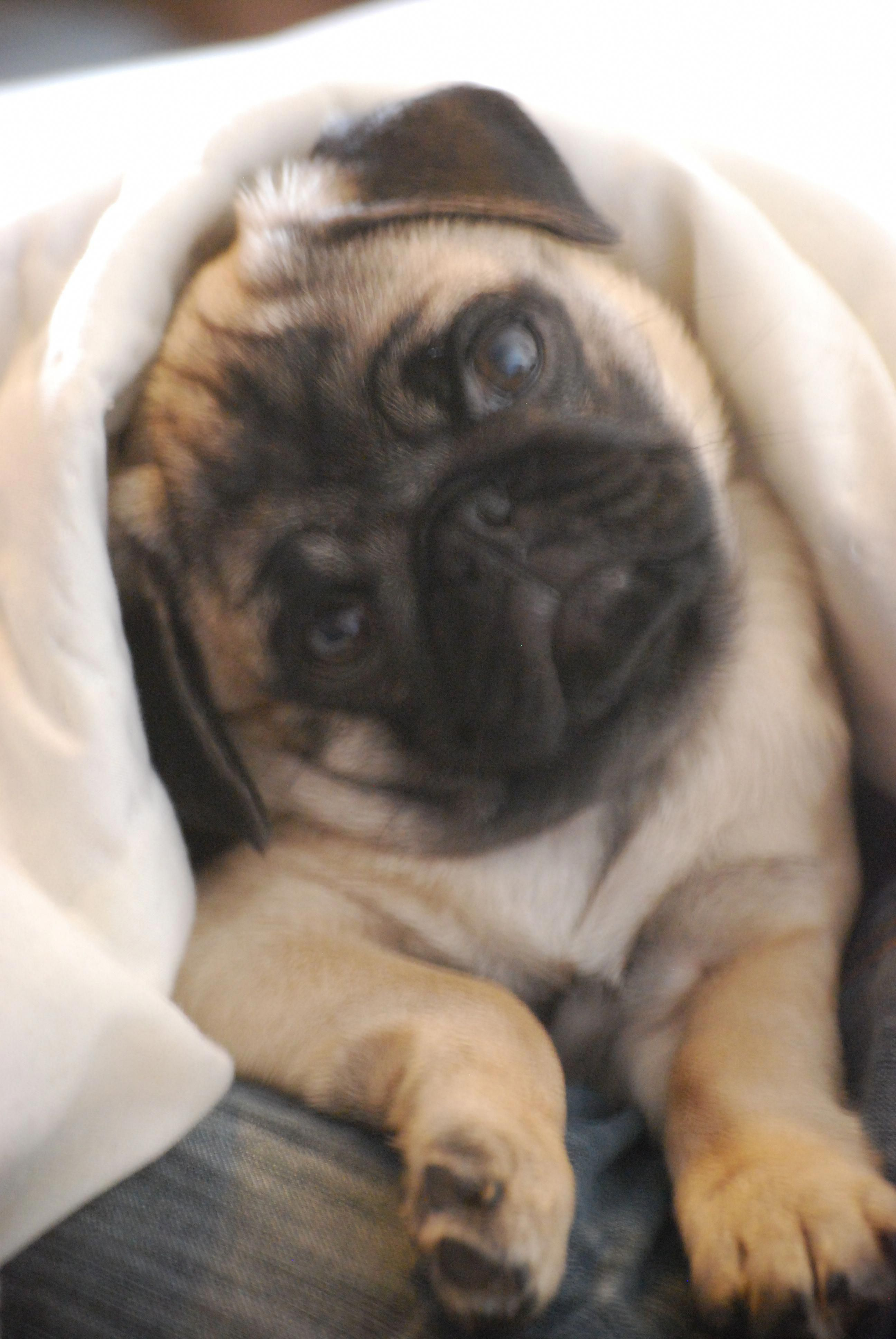 Explore Our Website For Additional Relevant Information On Pug