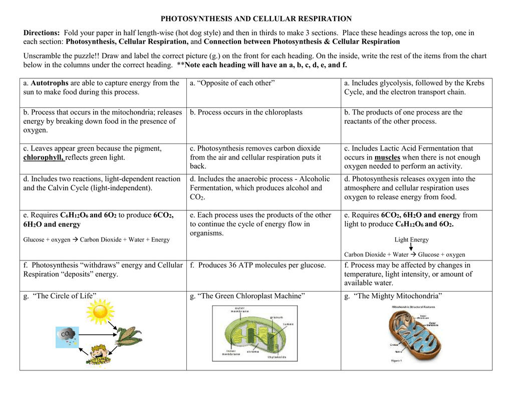 Find The Training Resources You Need For All Your Activities Studyres Contains Mil Photosynthesis And Cellular Respiration Photosynthesis Cellular Respiration [ 791 x 1024 Pixel ]