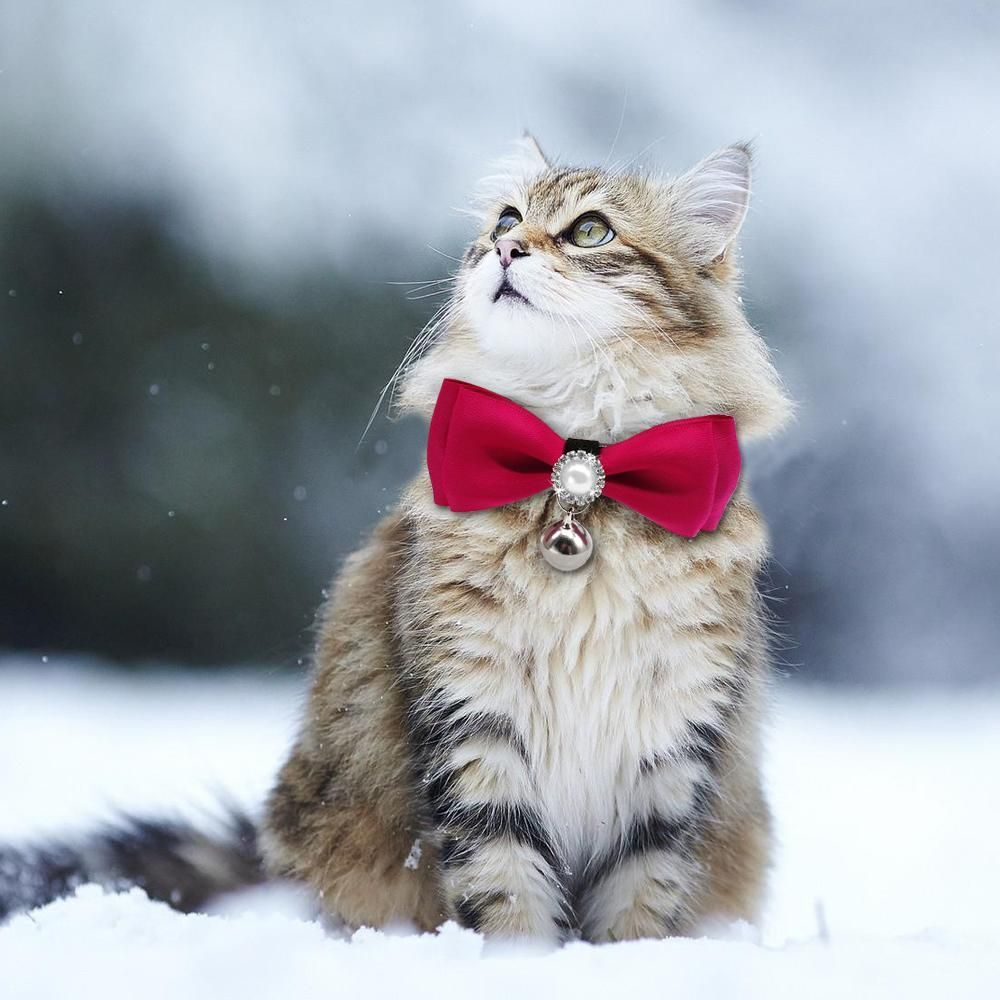 Gray /& Red Holiday Cat Collar Breakaway  Xmas  Pet Stocking Stuffer  Cat Small Dog Sizes Santa Claus Christmas Cat Collar Kitten