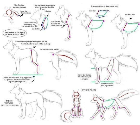 Resultado de imagem para anatomia desenho lobo | Lobos | Pinterest ...
