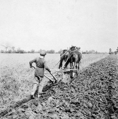 Messy boyz plough