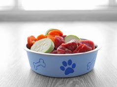 Easy raw dog food recipe with ground beef and chicken liver easy raw dog food recipe with ground beef and chicken liver forumfinder Image collections