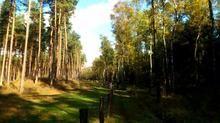 Teutoburger Wald