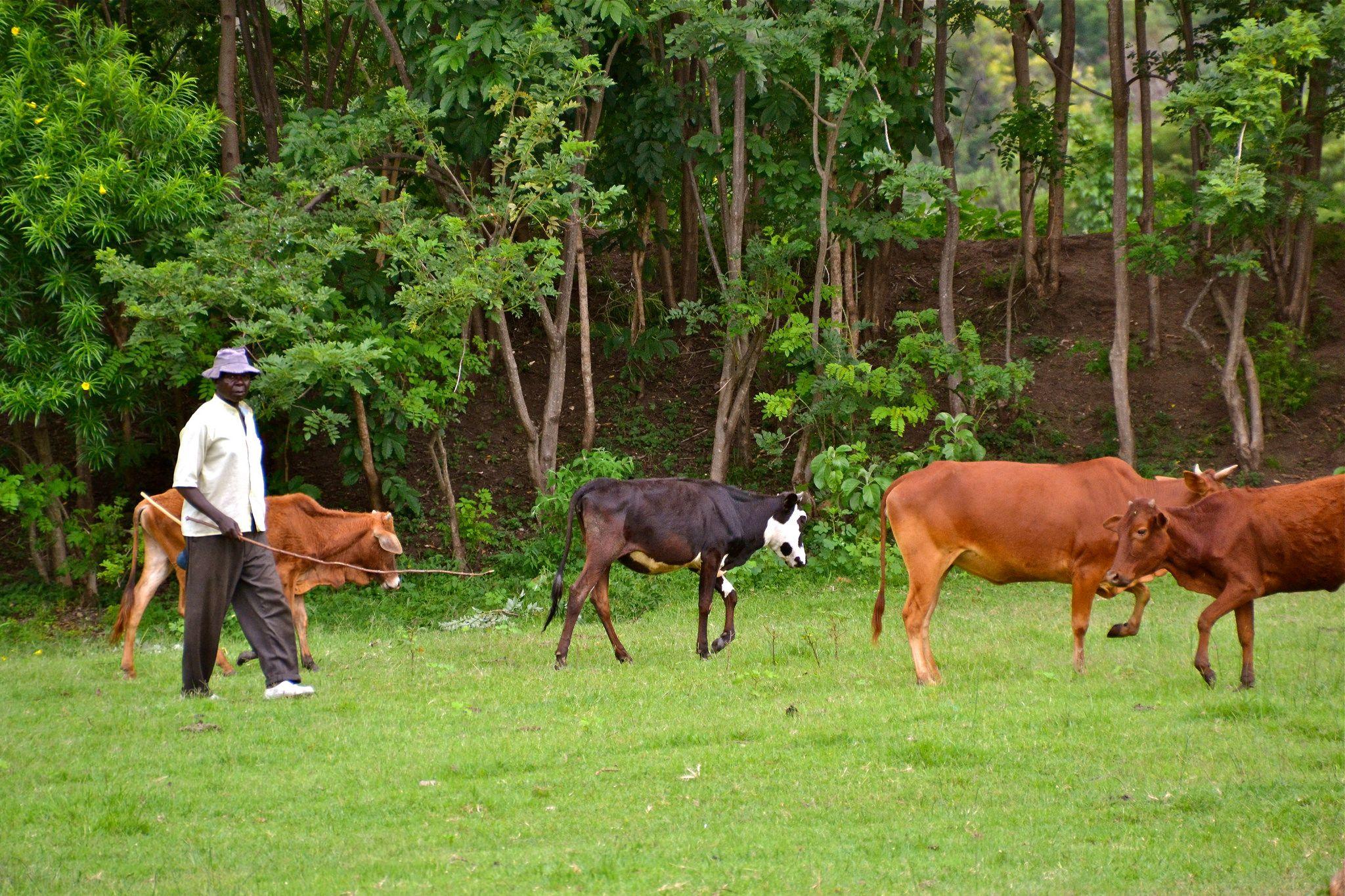 Appel à Projets: Solutions #Innovantes pour l'#Agriculture en #Afrique