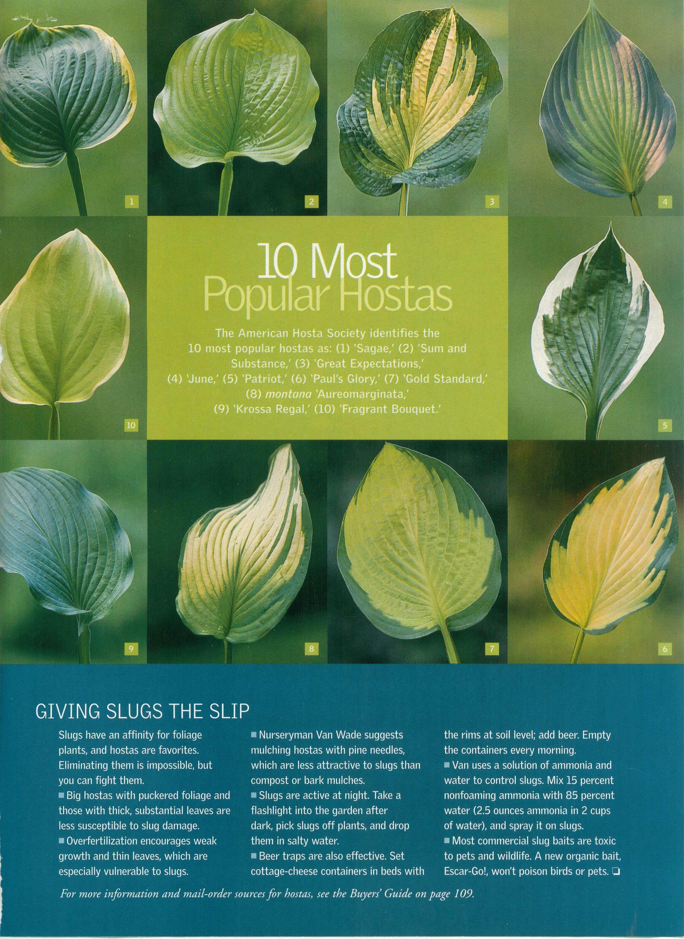 As 25 melhores ideias de hosta varieties no pinterest - Plantas de sombra ...